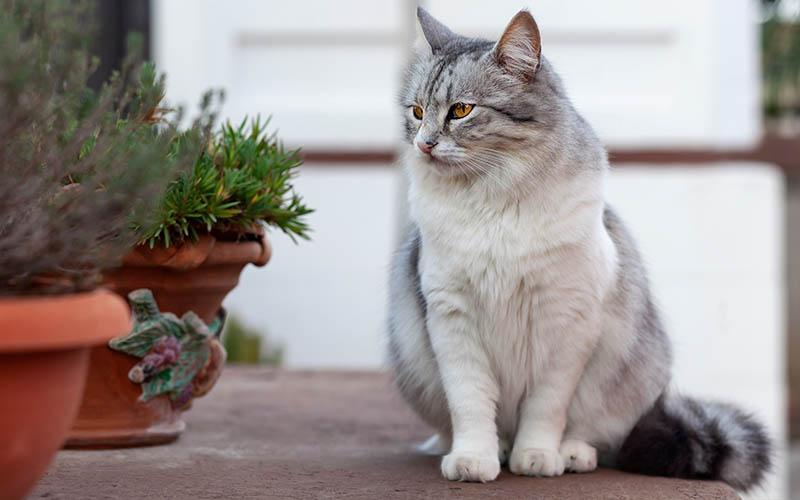 bezsrstá kočička fotky